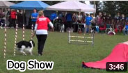 2012 Dog Show Video